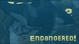 Endangered Quest! Orca Sighting!! - Episode #9
