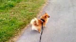 ぽぽちゃんと公園に行ったとき at the park with popo.