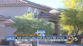 Man hospitalized after Buckeye bee attack
