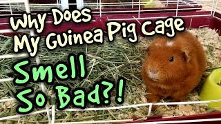Why Does My Guinea Pig Cage Smell So Bad?!
