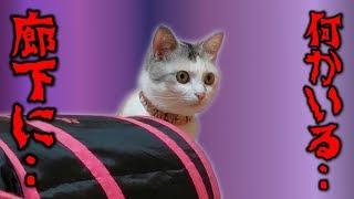 我が家の猫ネコ吉と猫部屋で遊んでいた所、突然ネコ吉が何か未知の気配...