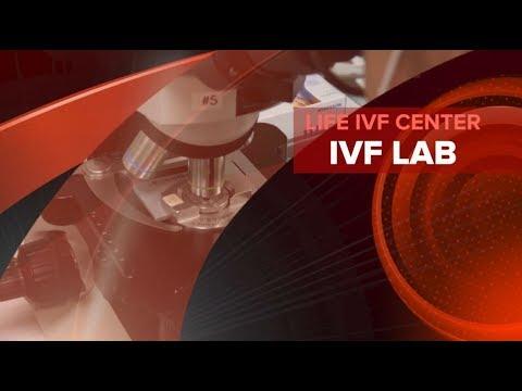 Life IVF Center  IVF Lab