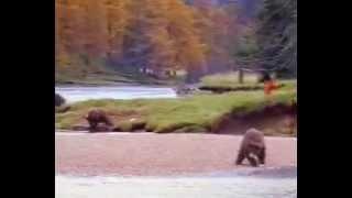 медведь против мужика ржач)))