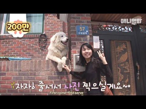 The dog who became an internet sensation ★Samsik★