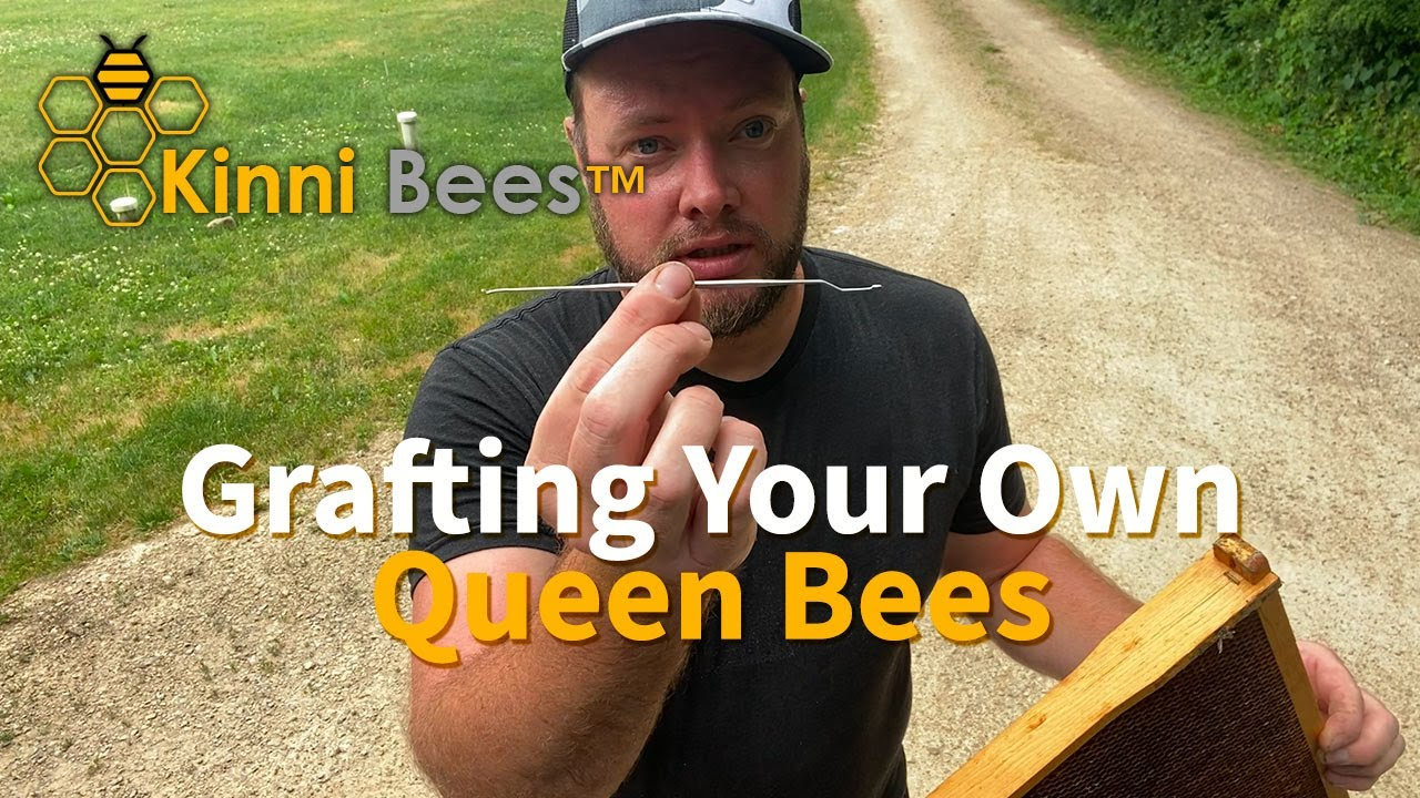 1 of 3- How to Graft Queen Bees