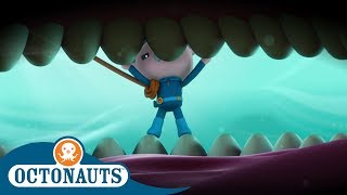 #StayHome Octonauts - Down the Hatch   Compilation   Cartoons for Kids