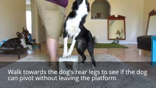 How To Teach Your Dog To Pivot To Your Left And Right Side For Heeling
