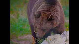 The Story of Zoya & Julya - two bears rescued by FOUR PAWS