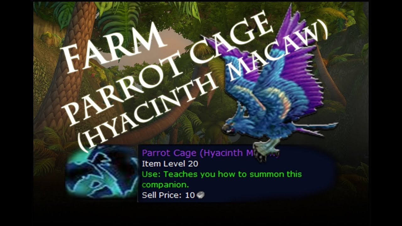 World Of Warcraft Farm Spot Parrot Cage Hyacinth Macaw Pirate Hat 5 0 5 Youtube