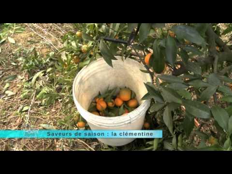 saveur-de-saison-:-la-clémentine