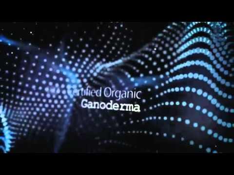 ogcoffeholic's channel Organo Gold   TREASURE OF LIFE