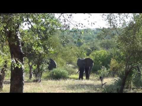 Laatste video Zuid-Afrika