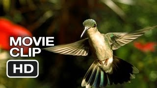 Disneynature: Wings of Life Movie Clip - Hummingbird (2013) - Meryl Streep Movie HD
