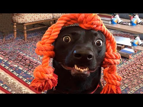 Funniest  Dogs And Cats - Funny Pet Animals' Life