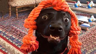Download 🤣 Funniest 🐶 Dogs And 😻Cats - Funny Pet Animals' Life 😇 Mp3 and Videos
