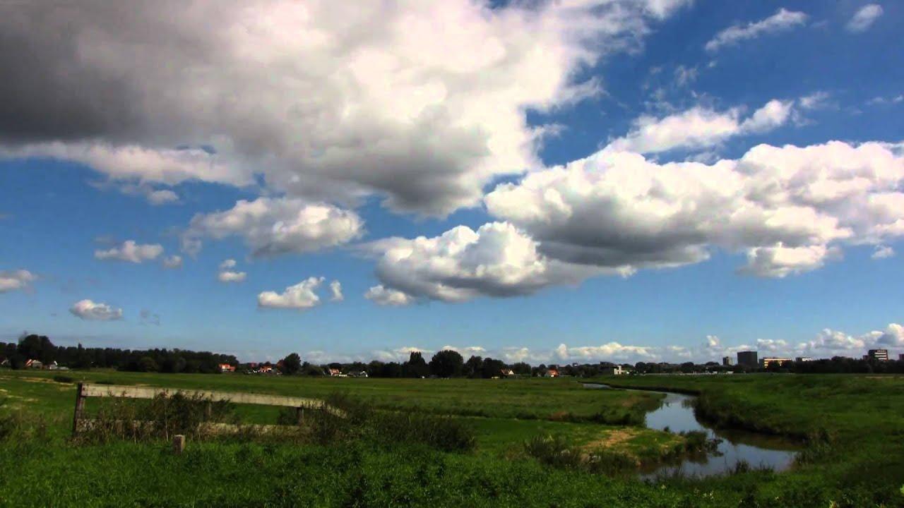 plant grass polder landscape