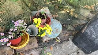 Publication Date: 2019-11-27 | Video Title: 南丫島廢棄學校