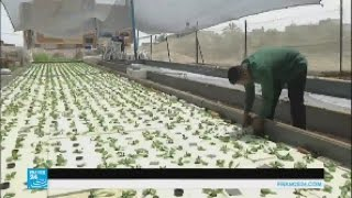 غزة: مزارعون يلجؤون للزراعة المائية لحل مشاكل القطاع الزراعي