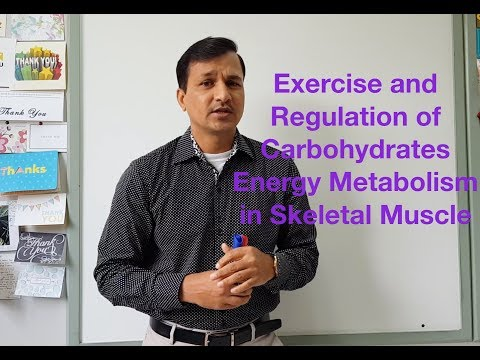 Exercise and Carbohydrate Energy Metabolism in Skeletal Muscle