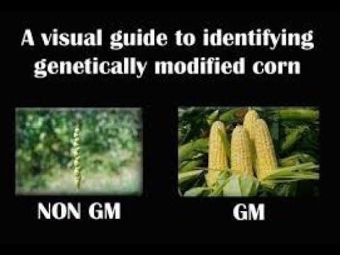 GMO Documentary