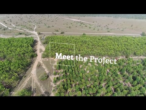 Colombian Timber: Forestry Investments In the Eastern Plains Of Colombia