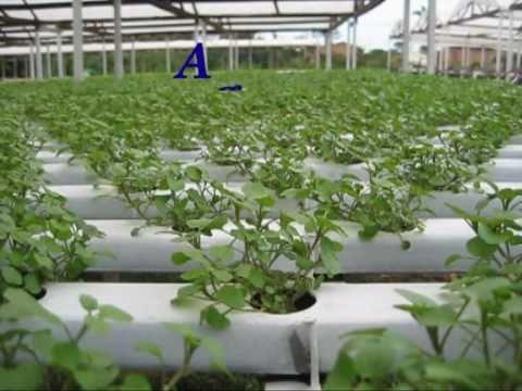 Agrovida Cultivos Hidroponicos Youtube - Cultivo-hidroponicos