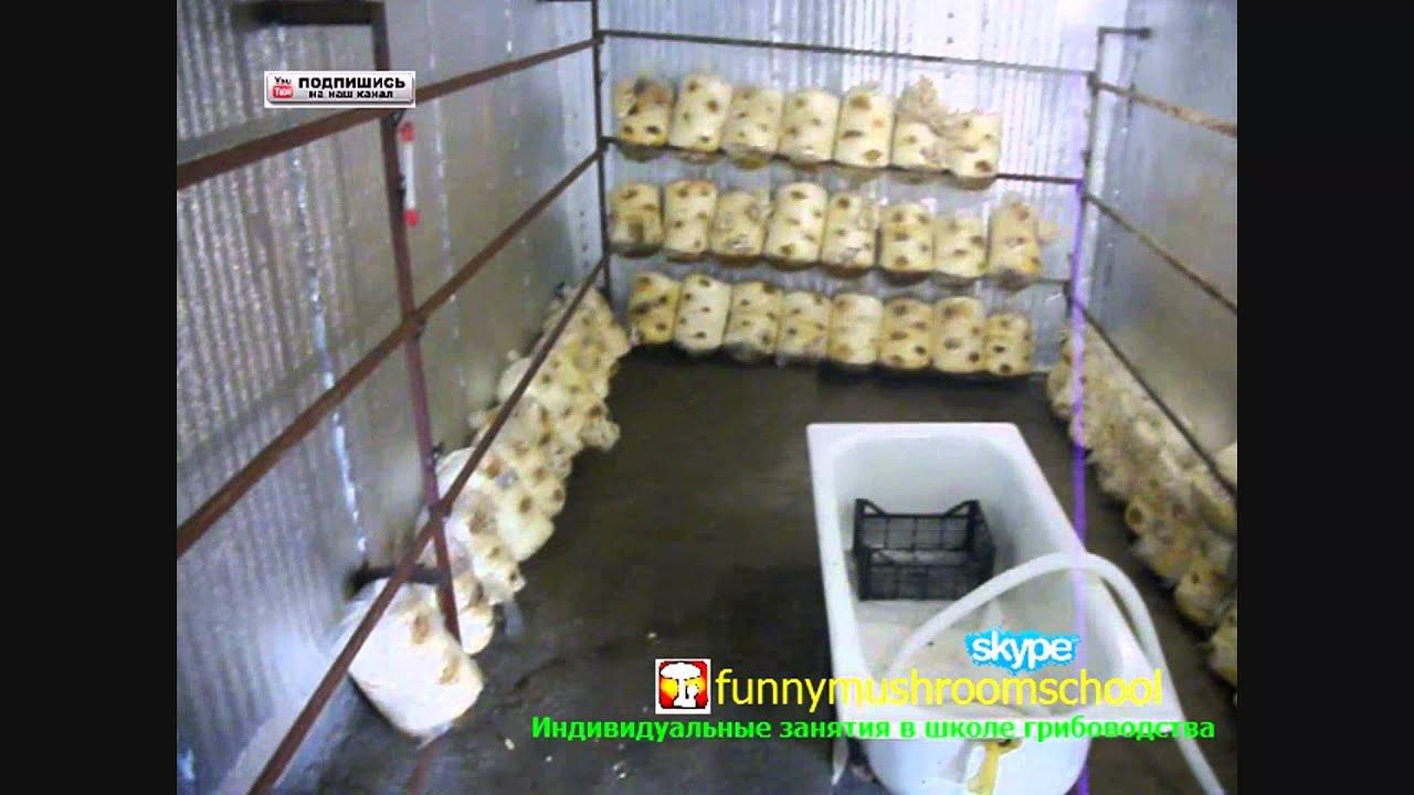 Условия в помещении для выращивания вешенки 527