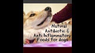 Natural Antibiotic Anti inflammatory foods for dogs
