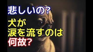 チャンネル登録はこちらからも可能です☆→http://ur0.pw/Gf0q 今回は、ワ...