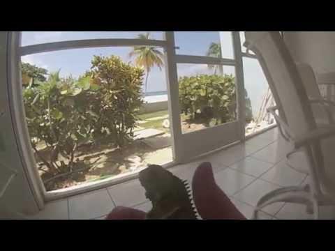 Cayman Islands Herping