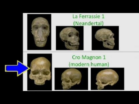 CARTA: The Genetics of Humanness: Ed Green - The Neandertal and Denisovan Genomes