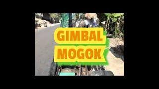 Video Clip Reggae 39 s Gimbal Mogok