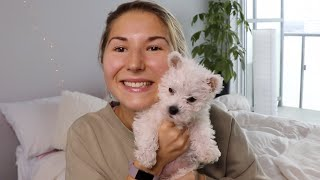 I got a Puppy! | 10 Week Old West Highland Terrier (Westie)