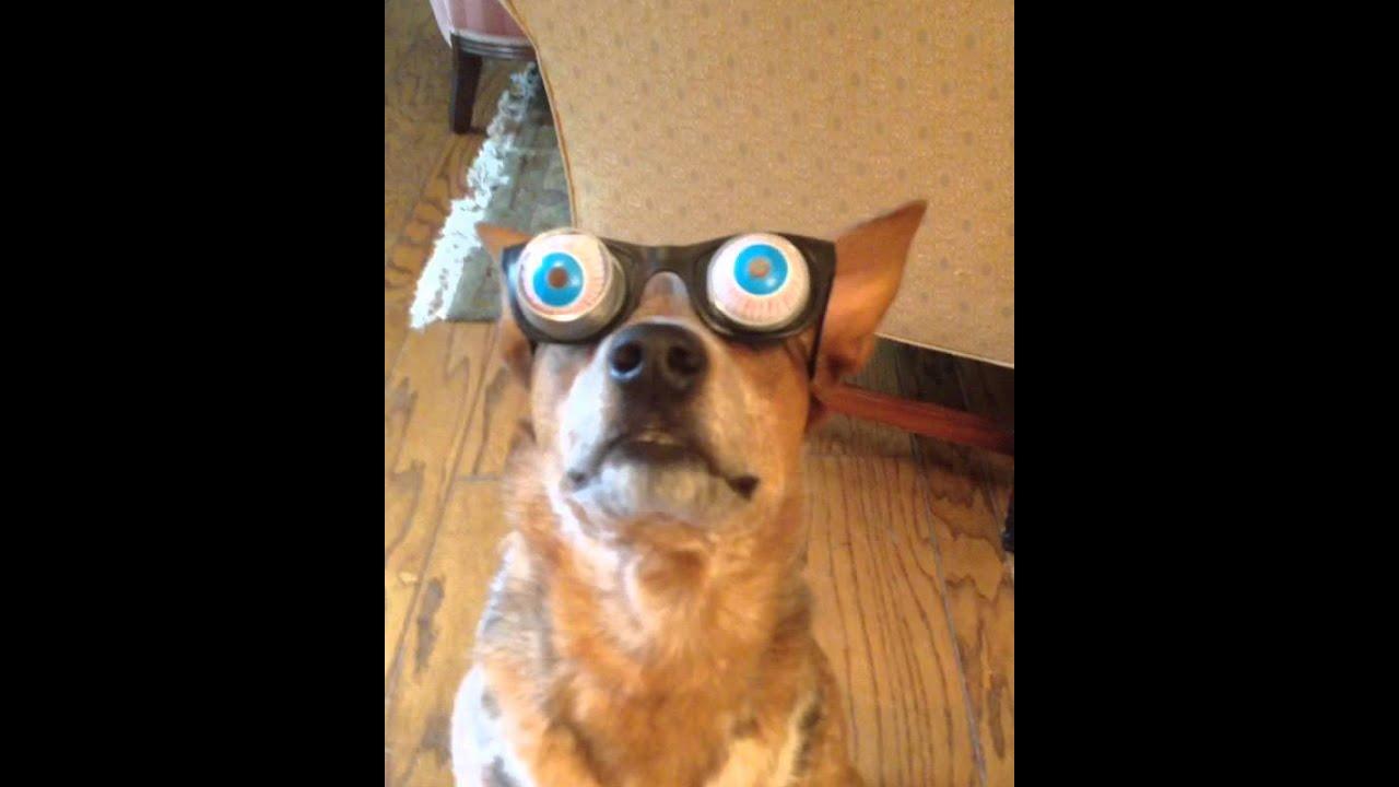 Googly Eyes On Dog