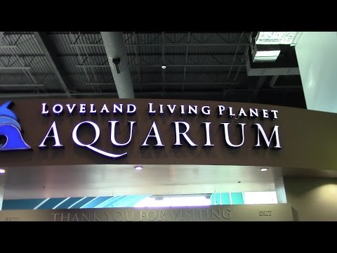 Aquarium Visit, Salt Lake City, Utah;  January 2015
