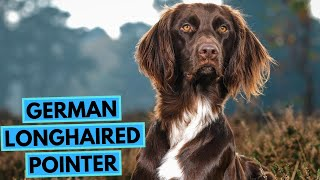 German Longhaired Pointer  TOP 10 Interesting Facts