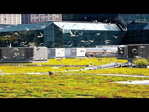 Jacob K. Javits Convention Center - Greenroofs.com Featured Project Replay
