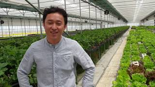 [공동협력판매] 귀농 2년만에  유러피안상추 샐러드 바…