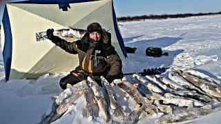 рыбалка в ТУНДРЕ на МНОГОРАЗОВЫХ ЖИВЦОВ Щучий БЕСПРЕДЕЛ Подготовка к НОЧЁВКЕ в ШТОРМ часть 1