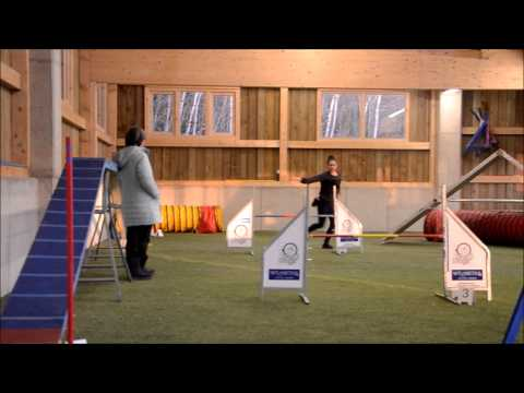 Morgan's agility training 15.02.03. –  21 months old english Pointer