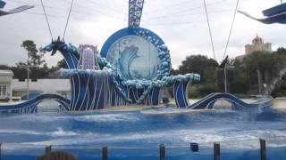 Лучшее шоу с дельфинами которое я видела (Флорида, Орландо 2013)