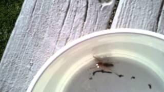 Video-2012-07-30-17-35-16.mp4