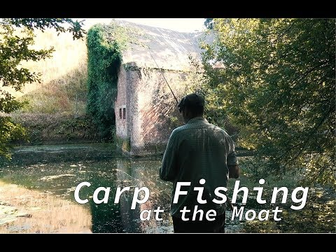 An Afternoon At The Moat - Carp Fishing