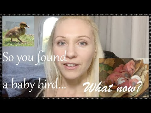 What if you find a baby bird?