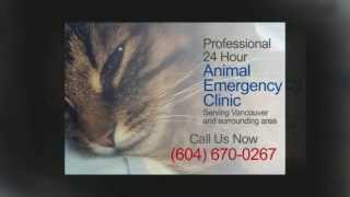 Animal Emergency Clinic Vancouver -Call (604)670-0267