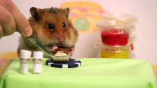 Thanh niên và hamster thi ăn cực hài.