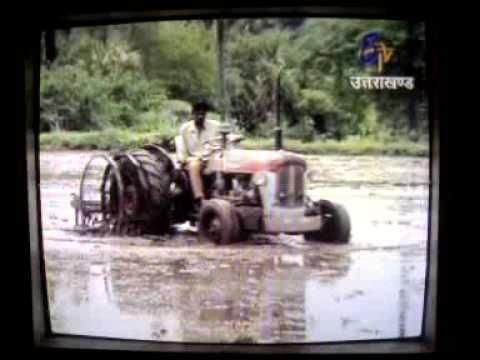 production of basmati rice by Dr. Ritesh Sharma.mp4
