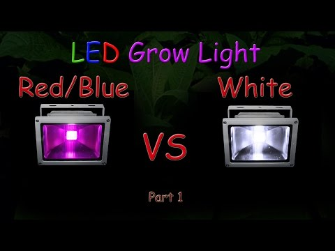 White LED vs Red/Blue LED Grow light Grow Test - Part 1 (Educational)
