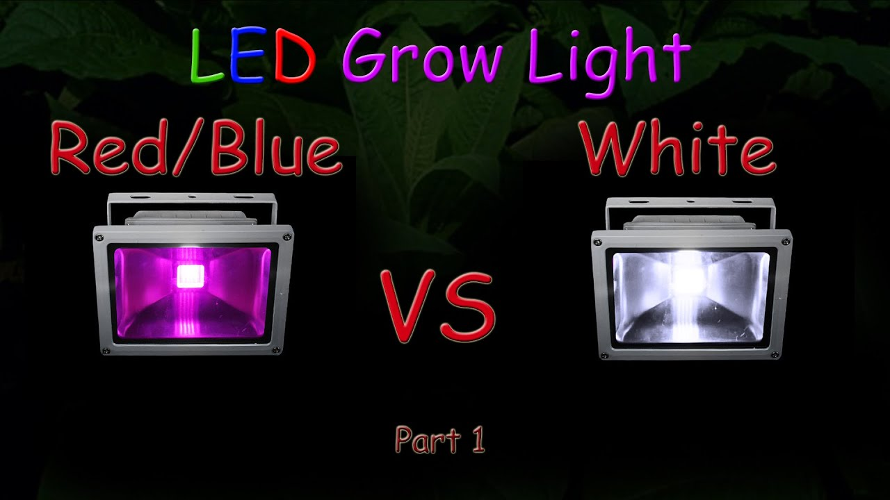 White 1Educational2016 light LED vs LED RedBlue Grow Test Part Grow uT1lFKJ35c