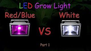 White LED vs Red/Blue LED Grow light Grow Test - Part 1 (Educational) 2016